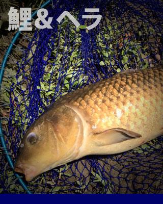 ビク/Fish Bascket